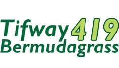 Tifway 419 Bermudagrass